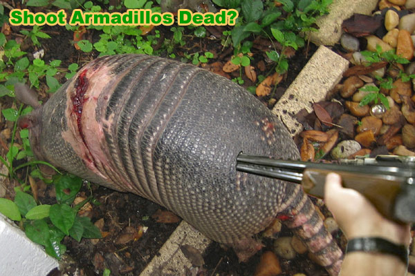 how to kill armadillos