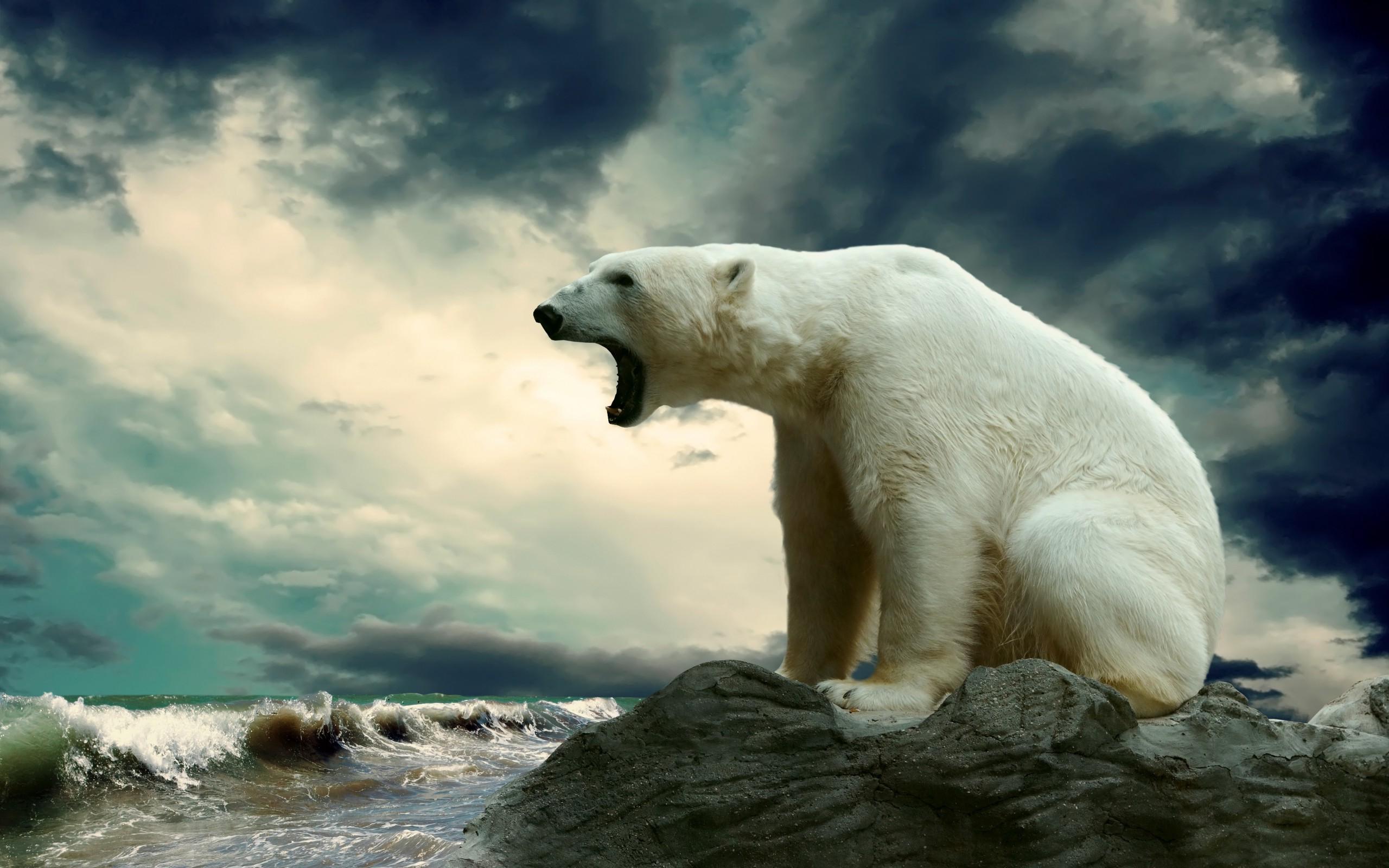 Angry Polar Bear Do Not Disturb