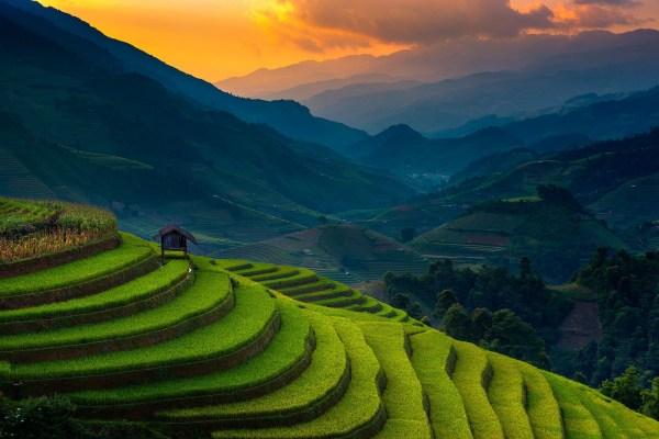 landscape in vietnam - wildlife