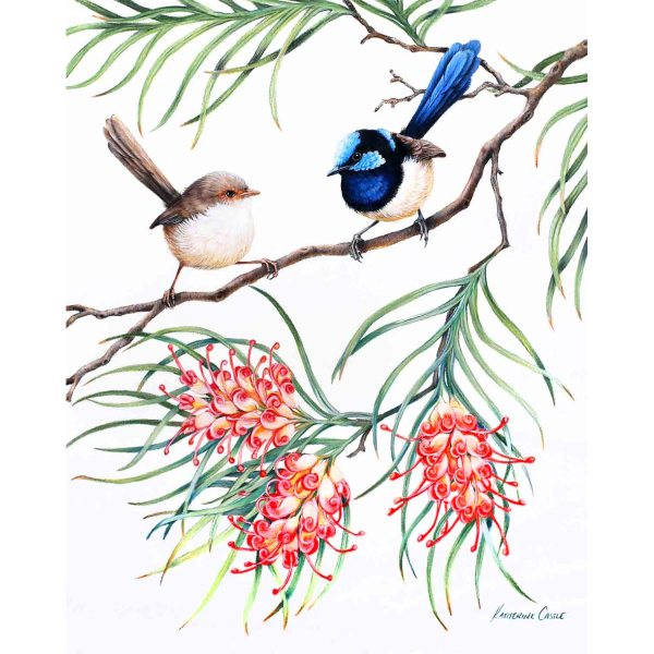 A Courtship - Superb Fairy-wrens