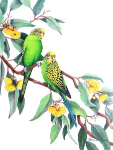Budgies by Katherine Castle