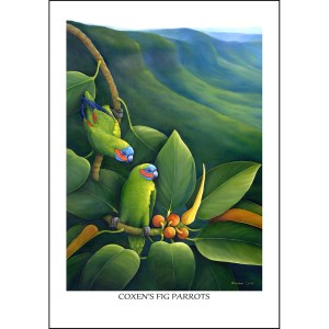 Coxen's Fig Parrot Greeting Card