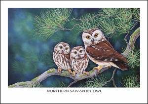 Northern Saw-Whet Owl Greeting Card