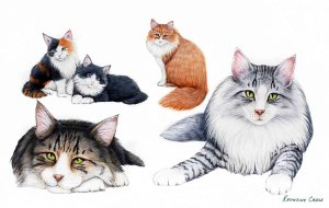 Norwegian Forest Cats Drawing