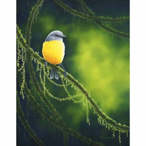 Rainforest Tranquility - Eastern Yellow Robin