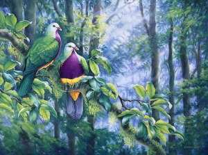 Canopy Secrets - Wompoo Fruit Doves