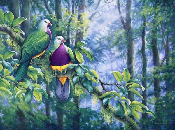 Canopy Secrets - Wompoo Fruit Doves