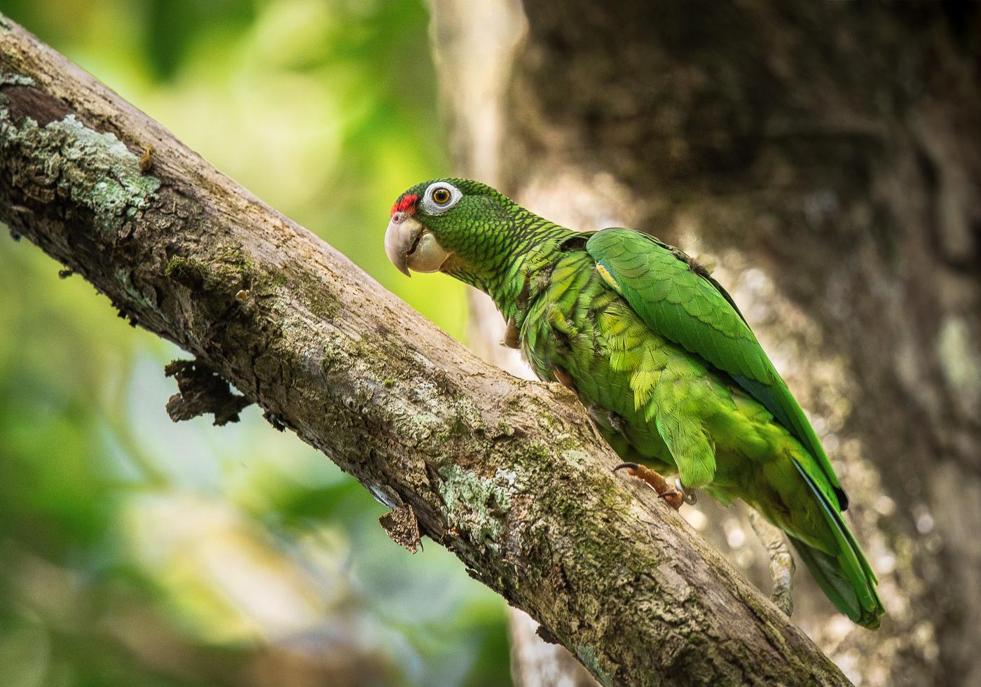 Somos De Aqui The Enduring Wildlife Of Puerto Rico