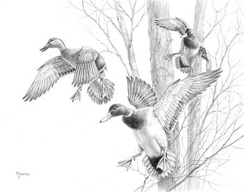 Wildlife Experience: David A. Maass
