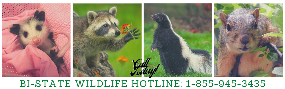Call Us at 1-855-945-3435!