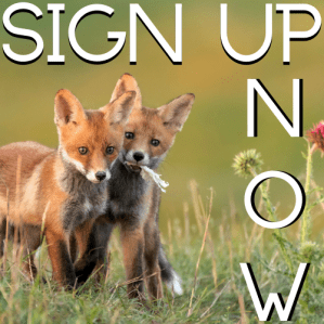 Sign Up Now!
