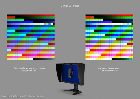 moncal1 600x427 Monitor Calibration with ColorMunki