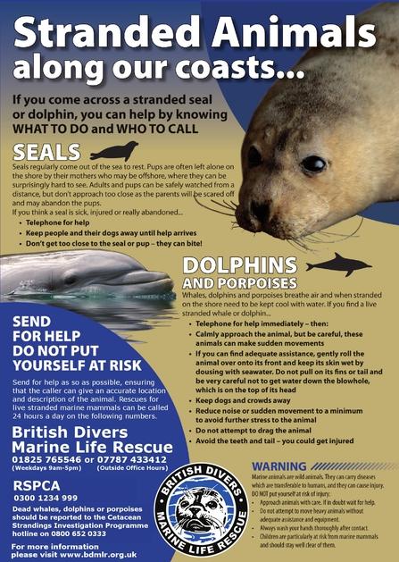 marine sightings strandings the