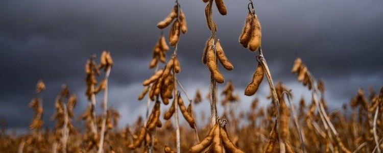 FoodNavigator | How can industry prevent soy becoming a 'demonised' commodity like palm oil?