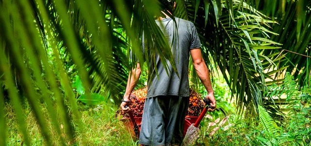 Medium | Supply chain transparency could be vital to easing tensions around Indonesian palm oil