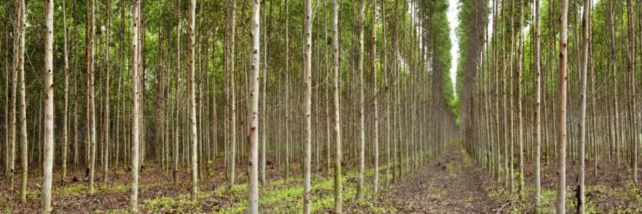 Yale E360 | Why Green Pledges Will Not Create the Natural Forests We Need