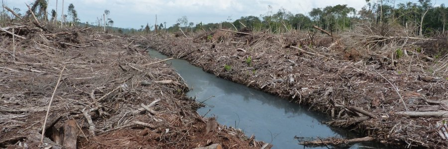 PHYS   Preparing land for palm oil causes most climate damage