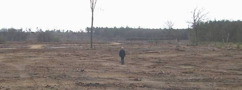 GWW | Deforestation Rate in The Netherlands is even higher than in Brazil