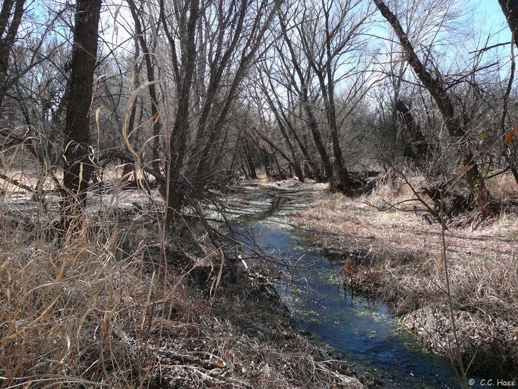 Cienega Creek in winter