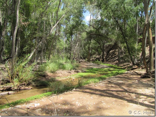 Mattie Creek is nornally a quiet green haven.
