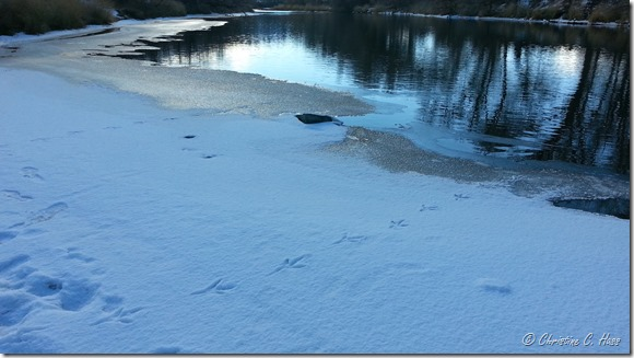 Great Blue Heron tracks on the ice