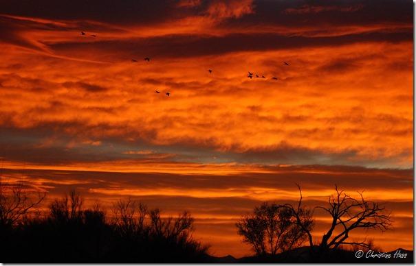Sandhills in the New Mexico sunrise