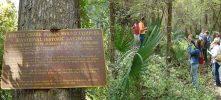 The Bottle Creek Indian Mound Interpretive Kayak Tour