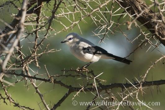 reisverslag vogelreis Ethiopië met Wild Nature Travels