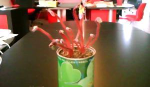 The office kudzu timelapse - Come cresce un fagiolo!
