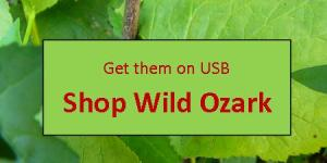button to order Into Ginseng Wood on USB from Wild Ozark