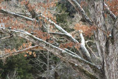 tree dusting