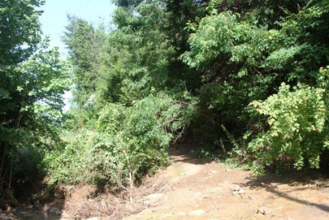 Slow Landslide at Wild Ozark
