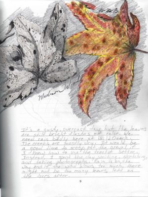 The sketch in the winner's journal - Two Sweetgum leaves, by Madison Woods