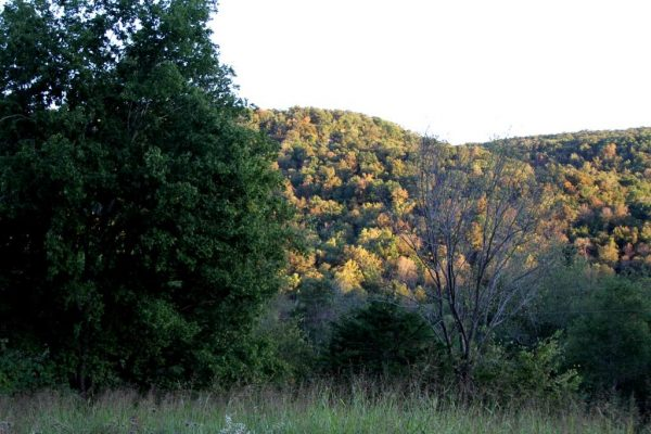 Fal color is beginning in the Ozarks