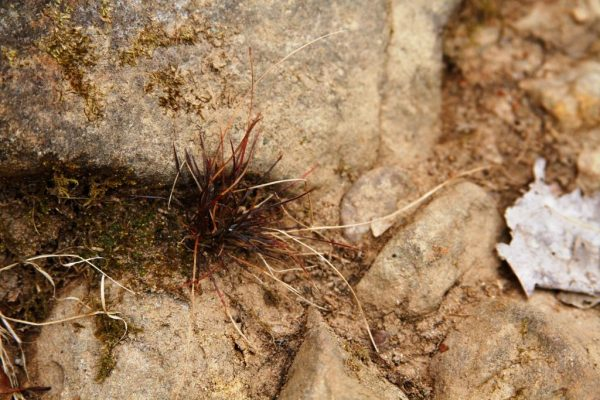 Little things, like this tuft of grass, catch my eye and demand a photograph. it's no wonder I can't keep up.