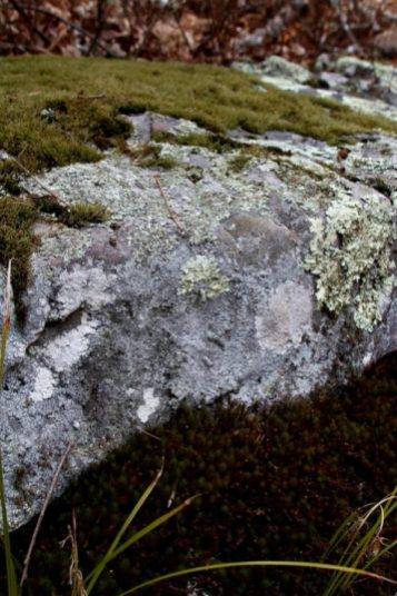 Moss above and moss below a lichen covered rock.