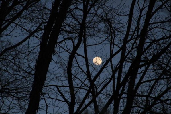 Moon behind tree silhouettes