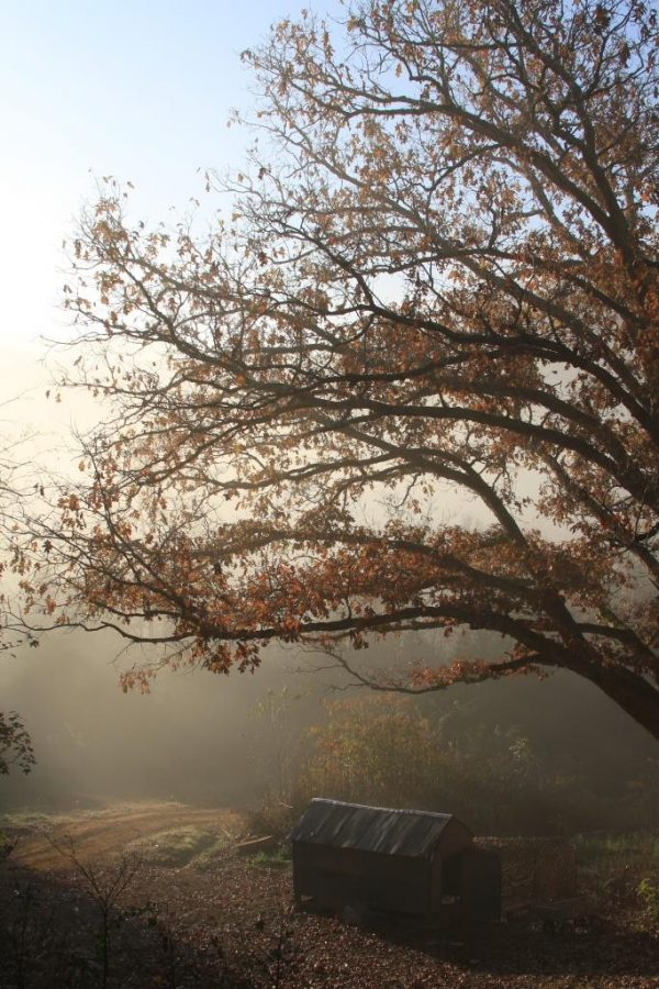 "Beautiful foggy morning. I call the tree ""Gloria""."