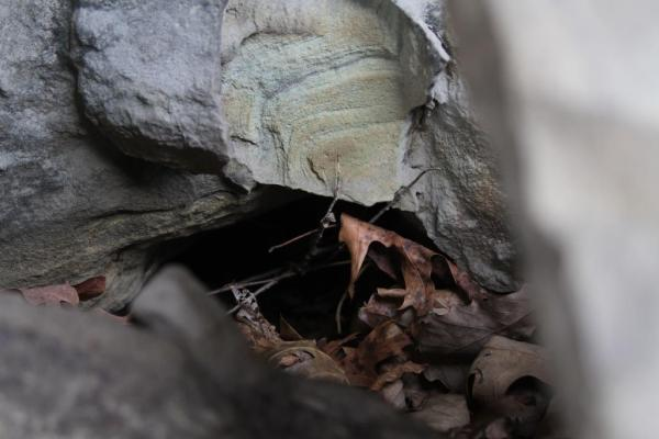 A critter hole, entrance to a home for some small animal.