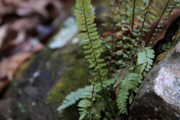 Ferns growing in very little soil