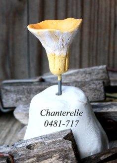 chanterelle-0481-717