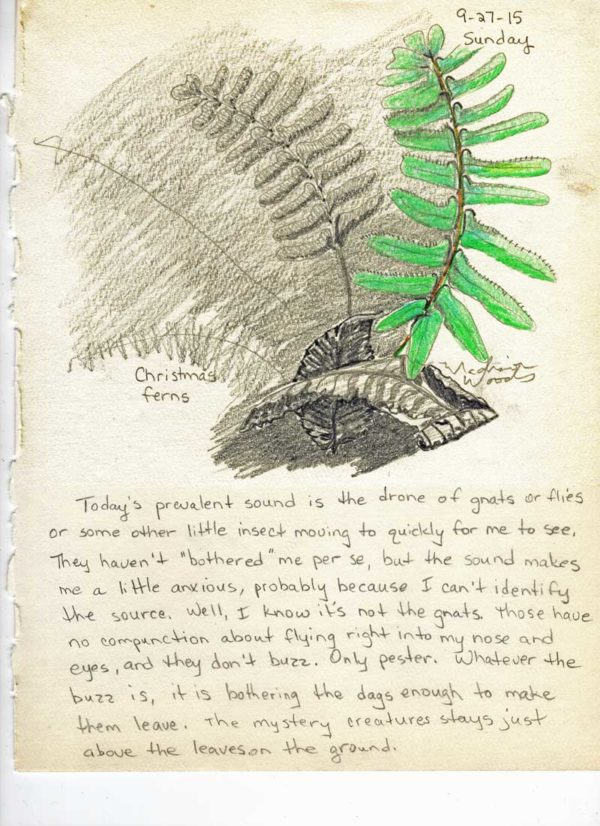Nature journal entry Day 7 Christmas Fern