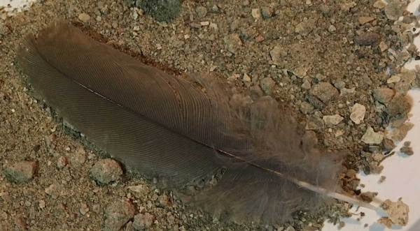 A little of the sand of Doha and a feather too.