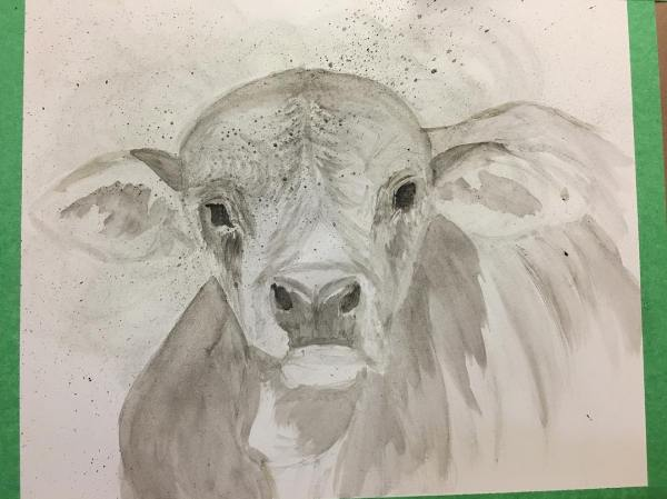 Brahman Baby in progress. Continuing to add layers of shades of gray and black. This will continue until I'm ready to begin adding the details.