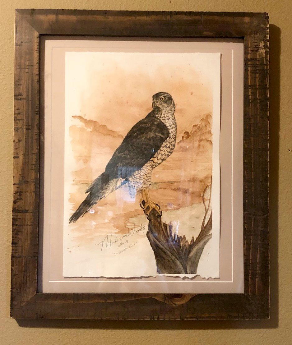 Framed Goshawk Original Watercolor Painting in Ozark pigments.