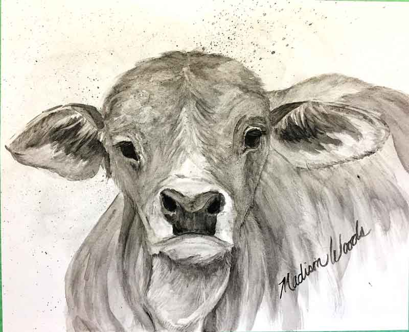 """Brahman Baby"", in bone black, creek shale, and willow black. At the point now where I'll begin adding details, refining highlights and shadows. You can see the whole process by going to the post at my Wild Ozark site."