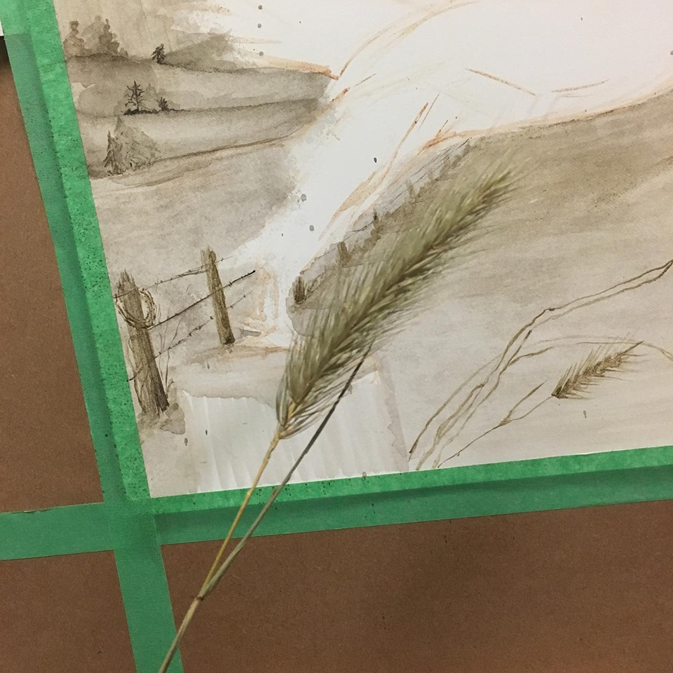 A handy grass to use as a model for an element in my red-tail painting.