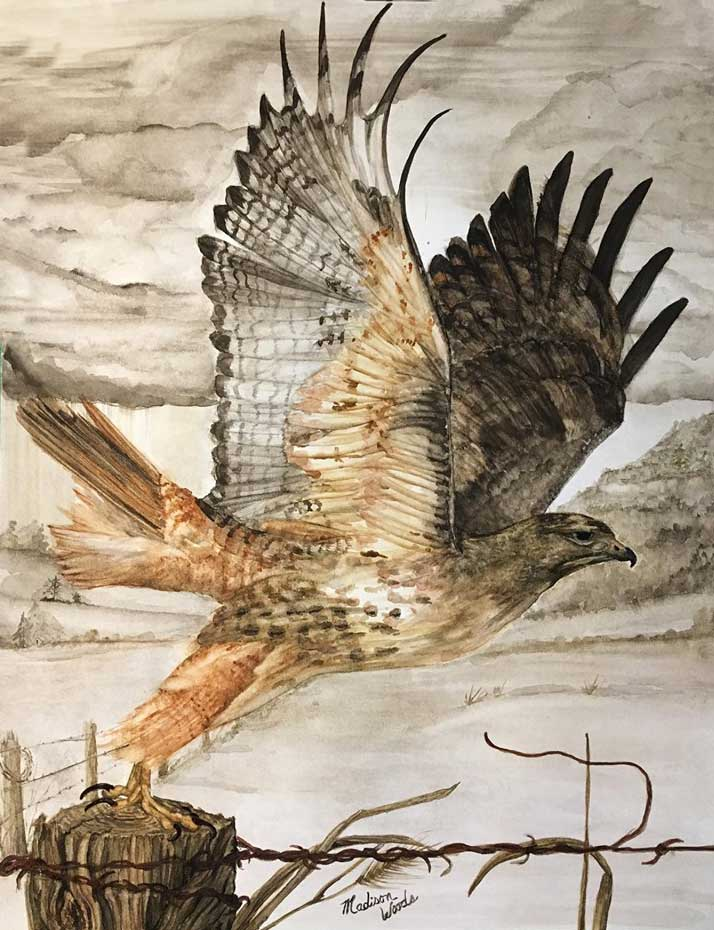 """""""Destination Unknown"""", in Ozark earth pigments. The model was a photo by Mike TR Dunn, used by permission. Media is handmade watercolors using real earth pigments on Fabriano 300# and is 16"""" x 20"""". The Red-tailed hawk is one of the birds in my ongoing Ozark Birds of Prey project."""