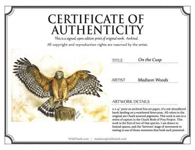 COA for the red-shouldered hawk print by Madison Woods