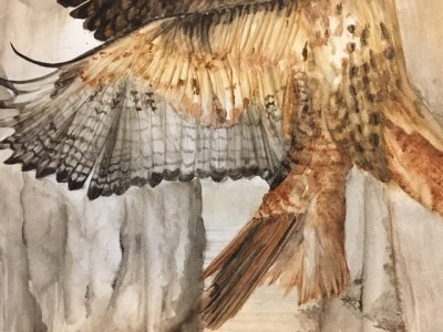 Tail and Wing closeup of red-tailed hawk painting.